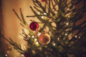 Как выбрать новогоднюю ель, можно ли самому срубить ее в лесу и куда сдать дерево после праздников?