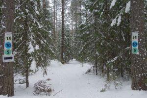 Бесплатные электрички для лыжников планируют запустить 17 января. Эту дату еще могут скорректировать из-за коронавируса