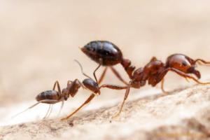 Почему люди боятся 5G, летят на Луну и становятся похожими на муравьев? Восемь текстов «Бумаги» о науке и исследованиях
