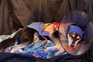 Петербуржца приговорили к исправительным работам за избиение собаки молотком. На ее лечение горожане собрали 300 тысяч