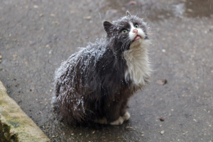 Чем кормить бездомных котов и собак и в какую организацию обратиться за помощью? Инструкция для тех, кто хочет помочь бездомным животным пережить морозы