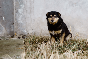 В Петербурге откроют два государственных приюта для бездомных животных