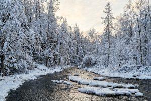 Этой зимой все едут в Линдуловскую рощу — гулять среди заснеженных лиственниц на берегу реки. Естественно, парковки забиты, а на въезде пробки