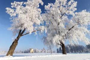 На улице невозможно красиво: деревья покрыты инеем, а реки стоят во льду. Петербуржцы — в восторге
