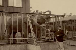 Как зоопарк в Петербурге выглядел в конце XIX века? Посмотрите фотографии из старинного альбома