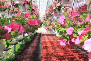 В 2021 году в Смольном планируют высадить в Петербурге 11 тысяч деревьев и 5 миллионов цветов