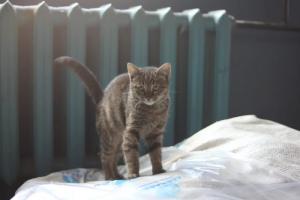 Завод «Севкабель» из-за сноса цехов ищет новых хозяев котам, живущим на его территории