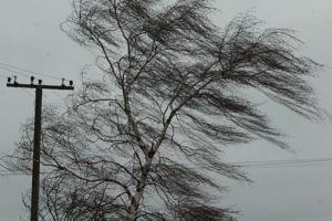 В Петербурге усилился ветер из-за циклона «Винсент». Порывы будут достигать 18 м/с