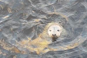 Петербургские зоозащитники поймали нерпенка из Крюкова канала. Горожане прозвали детеныша Капитаном Крюком (но это девочка)