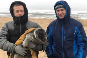 Петербургские зоозащитники спасли обессилевшего тюлененка, который приплыл к берегу Финского залива