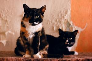 В пожаре на «Невской мануфактуре» пострадал кошачий приют. Волонтеры и сотрудники МЧС успели спасти почти всех животных