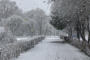 Кириши засыпало снегом в конце апреля! Жители в смятении, зато на видео и фотографиях — зимняя сказка ☃