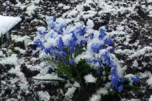 «Дед Мороз, уходи!». В Петербурге 28 апреля пошел снег — горожане шутят про неудачные проводы Масленицы ❄