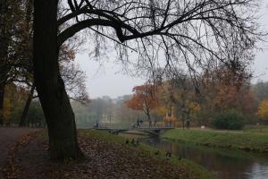 В Петербурге закрывают сады, парки и скверы из-за усиления ветра до 17 м/с