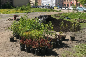 Петербуржцы превращают пустырь на Петроградской стороне в общественный сад. Посмотрите, как на выходных там высадили десятки видов растений