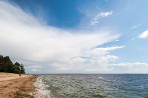 МЧС разрешило купаться на 15 пляжах в Петербурге. Ранее Роспотребнадзор назвал все городские пляжи непригодными