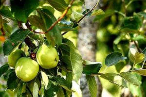 В ЖК «Ясно.Янино» во Всеволожске пройдет День новосела. Гости разобьют яблоневый сад