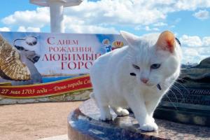 Петербургский кот Ахилл предсказал поражение России в первом матче Евро. Болельщики критикуют животное и даже предлагают признать его «иноагентом» 😿