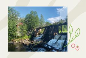 В Петяярви — маршрут для долгой бодрой прогулки и идеальные места для пикников. Осмотрите заброшенную финскую ГЭС с водопадом и лесные озера