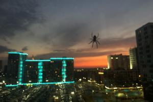 История не для арахнофобов. В ЖК «Я — Романтик» нашествие пауков — узнали, почему так и каково жить с ними по соседству 🕸