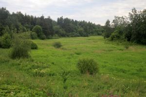 На юго-западе Петербурга появился новый природный заказник
