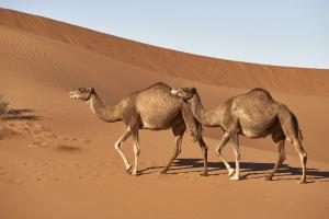 «Верблюд потеет только при +40». В Зоологическом музее составили новый маршрут — посвященный животным, которые легко переносят жару
