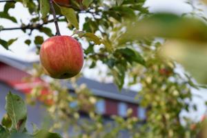 «Ночлежка» построит в Ленобласти приют для пожилых бездомных. У дома будет пруд и сад с фруктовыми деревьями