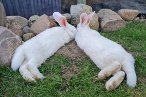 Петербургские активисты пристраивают 48 кроликов. В местном НИИ на животных испытывали витамины, говорят активисты