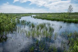 Десять экомаршрутов для прогулок на природе под Петербургом. Через сосновый бор, озера, радоновые источники и старинный усадебный парк