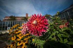 Смольный хочет создавать сады непрерывного цветения. Первые — в Приморском районе и на набережной Охты