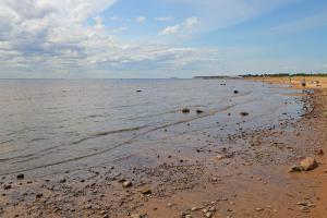 «Такие аномалии мы будем переживать всё чаще». Эколог и климатолог — о влиянии жары на петербуржцев, растения и обитателей Финского залива