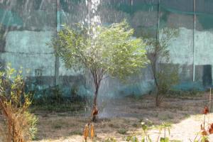 Как петербургский филолог спасал деревья от засухи с помощью поливальной машины, арендованной на деньги жителей Петроградского района