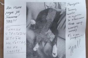 Питомцы не только теряются, но и находятся — вот пример кота Тимона. Его хозяйка блогерка tut_lera расклеила объявления с благодарностями — и теперь получает ответы от горожан