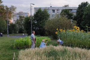 Петербуржцы создали зерновое поле под окнами дома на Софийской улице. В середине августа они планируют собрать первый урожай 🌾