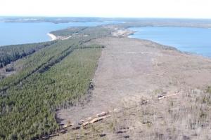 Активисты Приморска обвинили «Приморский УПК» в масштабной вырубке леса вокруг Высокинского озера. В компании это отрицают