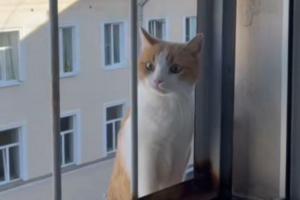 «Все коты района хотят со мной жить». Петербуржец рассказал, как в его в квартиру по карнизу приходят соседские питомцы. Минус: они требуют внимания даже по ночам