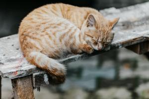 Частные приюты для животных в Петербурге получат от города 4 миллиона рублей на компенсацию коммунальных услуг
