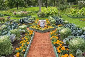 Виноградники, табак и черная тыква — приходите на Петровский огород в Стрельне, чтобы увидеть, как растили овощи 300 лет назад