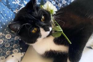 Петербургский кот Барик шатается и не может высоко прыгать из-за отсутствия мозжечка. Несмотря на всё, он стал звездой TikTok (потому что не сдается) 🐈