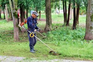 У вашего дома косят газон — и вам это не нравится. Что делать? Инструкция от «Деревьев Петербурга»