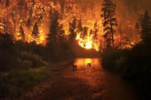 Горит лес — что делать? Инструкция от Greenpeace