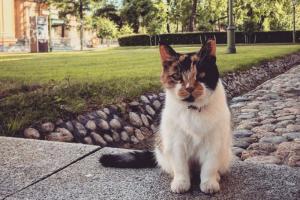 В Петербурге умерла кошка Капитолина, которая 20 лет была хранительницей Петропавловского собора