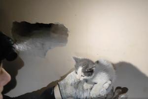 Сотрудники «Кошкиспаса» освободили двух котят из старого дымохода. Посмотрите видео спасательной операции 🐈