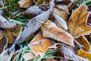 В Ленобласти неделя начнется с заморозков. Ночью будет до минус 3 градусов