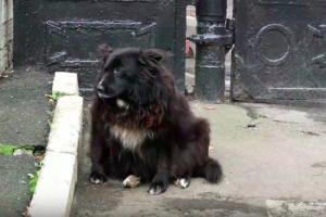 Умер пес Миша, который жил на Парадной улице и стал знаменитостью Центрального района. Петербуржцы вспоминают его историю и несут цветы к будке