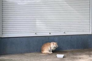 Уже устали от выборов? Предлагаем посмотреть инстаграм с котиками из Гатчины 😻