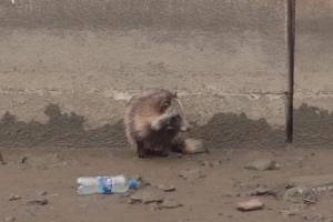 В Петербурге спасли енотовидную собаку, которая заплыла в Обводный канал и не смогла оттуда выбраться