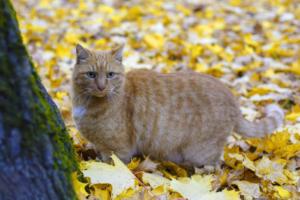 Потерялся 16-летний кот Ося из музея Анны Ахматовой. Сотрудники просят помочь с поисками
