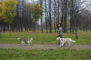 В Петербурге прошел «Необыкновенный кросс» — благотворительный забег с собаками по осеннему парку. Показываем фотографии 🐶