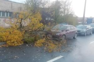 В Петербурге падают деревья из-за сильного ветра. Горожане сообщают о перекрытых дорогах и поврежденных машинах